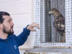 Осетинский Айболит: как зоолог превратил свой дом в приют для зверей и птиц