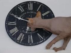 Игра с часами помогла коту убить время