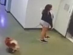 Оказавшись в нужном месте в нужное время, мужчина спас собачку