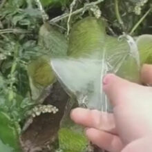 Лист растения покрылся ледяной скульптурой благодаря морозу