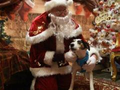 Четвероногие друзья человека получили возможность встретиться с Санта-Клаусом
