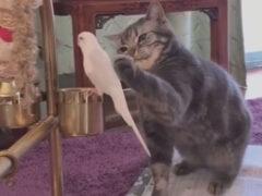 Кошке очень понравился маленький попугайчик