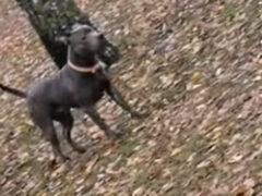 Пёс, потерявший хозяина, предположил, что тот любит лазать по деревьям
