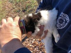 Кошка, неудачно поевшая из банки, застряла в ней