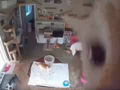 Камера видеонаблюдения очень интересует любопытного кота