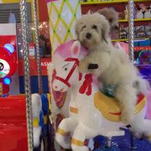 Хозяева, прокатившие собак на карусели, вызвали в свой адрес неодобрение