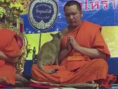 Молитвенное настроение монаха было прервано назойливой кошкой