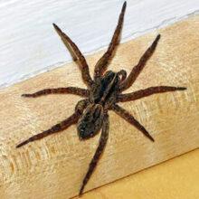 Видеоролик с пауком проиллюстрировал грубую поговорку