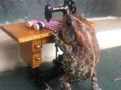 Любопытная жаба живёт жизнью, очень похожей на человеческую