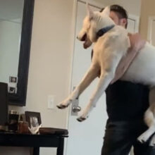 Собака одобрила выбор своей замужней хозяйки