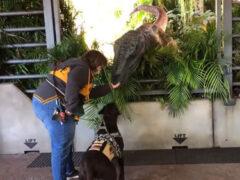 Пёс оказался не готов к встрече с динозавром