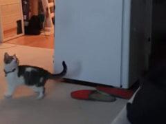 Старшая подруга помогла котёнку, лишившемуся игрушки
