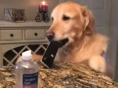 Пёс-клептоман не может себя контролировать