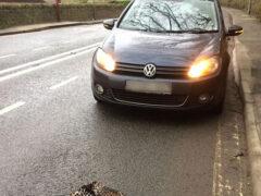 Экстравагантное пальто приняли за сбитого машиной леопарда