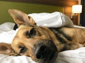 Приютские собаки скрашивают людям проживание в необычном отеле