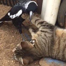 Кошка, к которой приставала птица, оказалась воплощением терпеливости