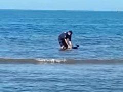 Валлаби, заблудившемуся в воде, оказали помощь