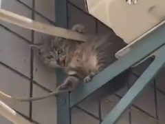 Кошка оказалась отличной матерью и спасла своего котёнка