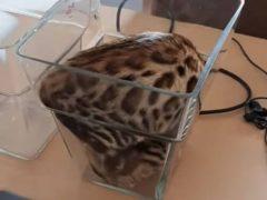 Странный кот решил поиграть в вазе