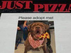 Портреты приютских собак помещают на коробки с пиццей