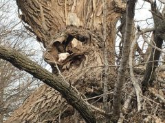 Пёс научился залезать на дерево, но не научился спускаться