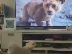 Собака, посмотревшая «фильм ужасов», не смогла сдержать эмоций