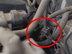 Водительница, приехавшая в техцентр, узнала, что в её машине поселился сурок
