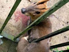 Обычная жидкость для мытья посуды помогла спасти оленя