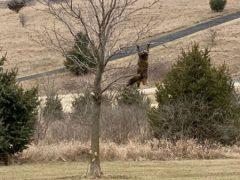 Кошка, повисшая на дереве, насмешила хозяина