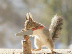 Фотограф подарил белкам инструменты, чтобы раскалывать орехи