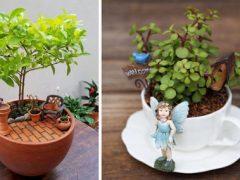 Крошечные сады в чайных чашках становятся прекрасным украшением интерьера