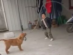 Мальчик, прыгающий через скакалку, получил помощь от четвероногого друга