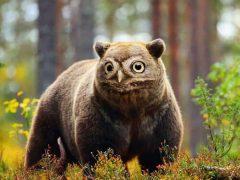 Комбинируя фотографии разных животных, выдумщик создаёт новые удивительные виды