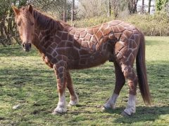 Благодаря оригинальной стрижке конь превратился в жирафа