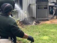 Аллигатор явился на задний двор и устроил там беспорядок