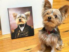 Домашние питомцы становятся моделями для портретов в старинном стиле