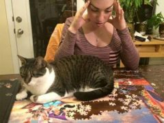 Хозяева убеждаются, что вражда кошек с пазлами неискоренима