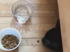 Вороватая кошка готова обокрасть саму себя
