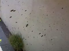 Семья оказалась в плену в собственном доме из-за пчёл