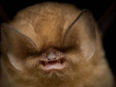 Знакомьтесь, большой кубинский воронкоух и еще 9 удивительных животных