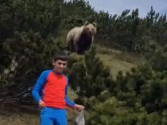 Появление медведя не заставило мальчика потерять самообладание