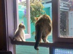 Злобная кошка выкинула котёнка из окна