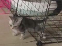 Решётка не смогла помешать кошачьему побегу