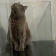 Любопытный кот оказался в ловушке в аквариуме