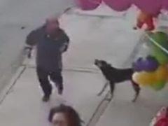 Попытавшись дать собаке пинка, прохожий не удержался на ногах