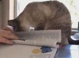 Онлайн-занятия студентки стали куда сложнее из-за навязчивой кошки