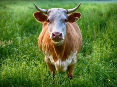 Сотни семей остались без электричества из-за чесавшегося быка
