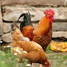 Чтобы люди не собрались в парке на праздник, власти раскидали по газонам куриный помёт