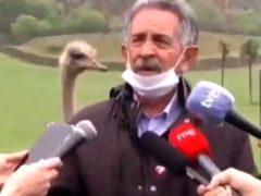 Страус принял участие в интервью политика