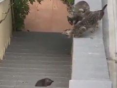 Кошек взволновала разлука с самым младшим членом семьи